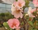 봄으로 피어난 꽃들