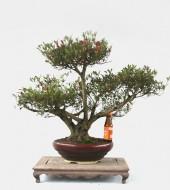 살마홍 특수목