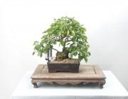 소사나무 8, 잊지못할 소품