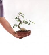 돌팽나무 소품 9번