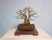 소사나무 3번 소품 주립