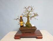 소사나무 2번 쌍간