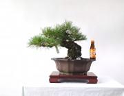 소나무 5번 잘 짜인 모양목
