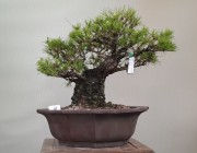 소나무 4번